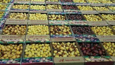 Local dates festival to open at Souq Waqif today